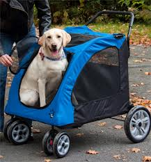 We care so much for our pets' safety that we even take them for walks in special doggy strollers.